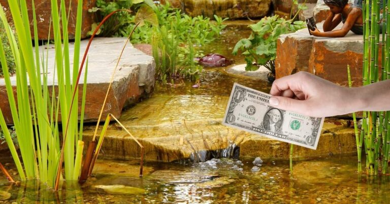 Backyard Pond Cost Per Year – Maintenance & Cleaning Costs Breakdown