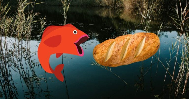 Can Fish Eat Bread? Why This Common Food Is Killing Your Fish (And Your Pond)