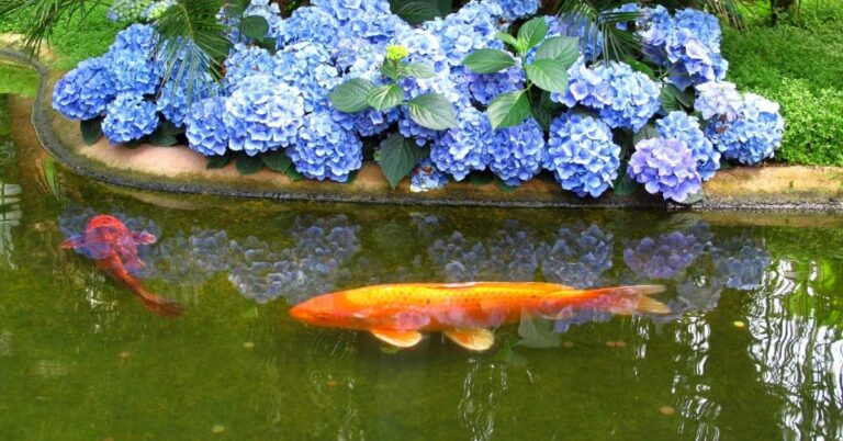 How Long Do Koi Fish Live? The Impact Of Environment, Nutrition & Lifestyle
