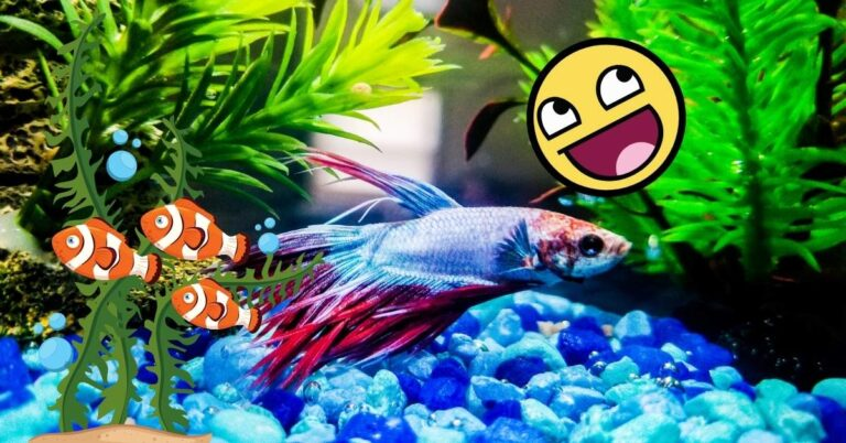 How To Make Betta Fish Happy – It's Actually Super Easy