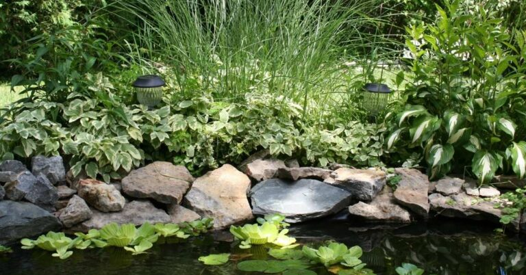 How To Make Your Backyard Pond Look More Attractive & Natural – 7 Simple Solutions